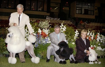 Sizes Of Poodles The Poodle Club Of America